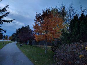 Der Herbst ist bereits in vollem Gange und die meisten Bäume haben bereits all ihre Blätter verloren.