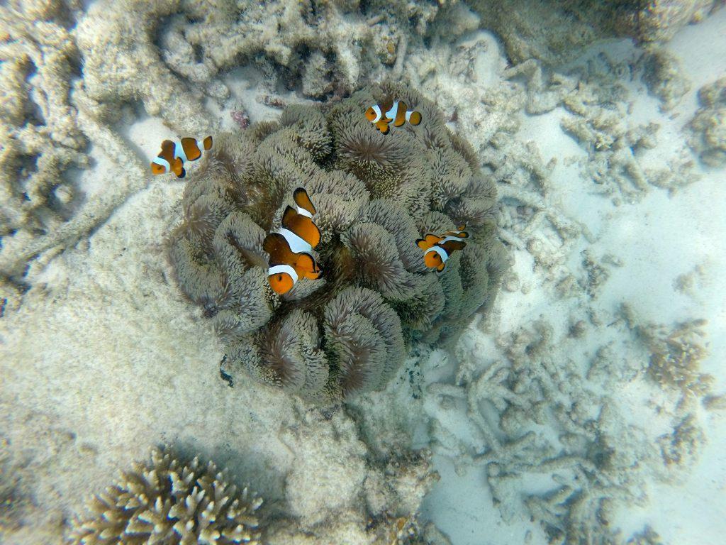 Nemo und seine Freunde, all die verschiednen Clown-Fische zählen aber nach wie vor zu meinen (Monika) liebsten Fischen.