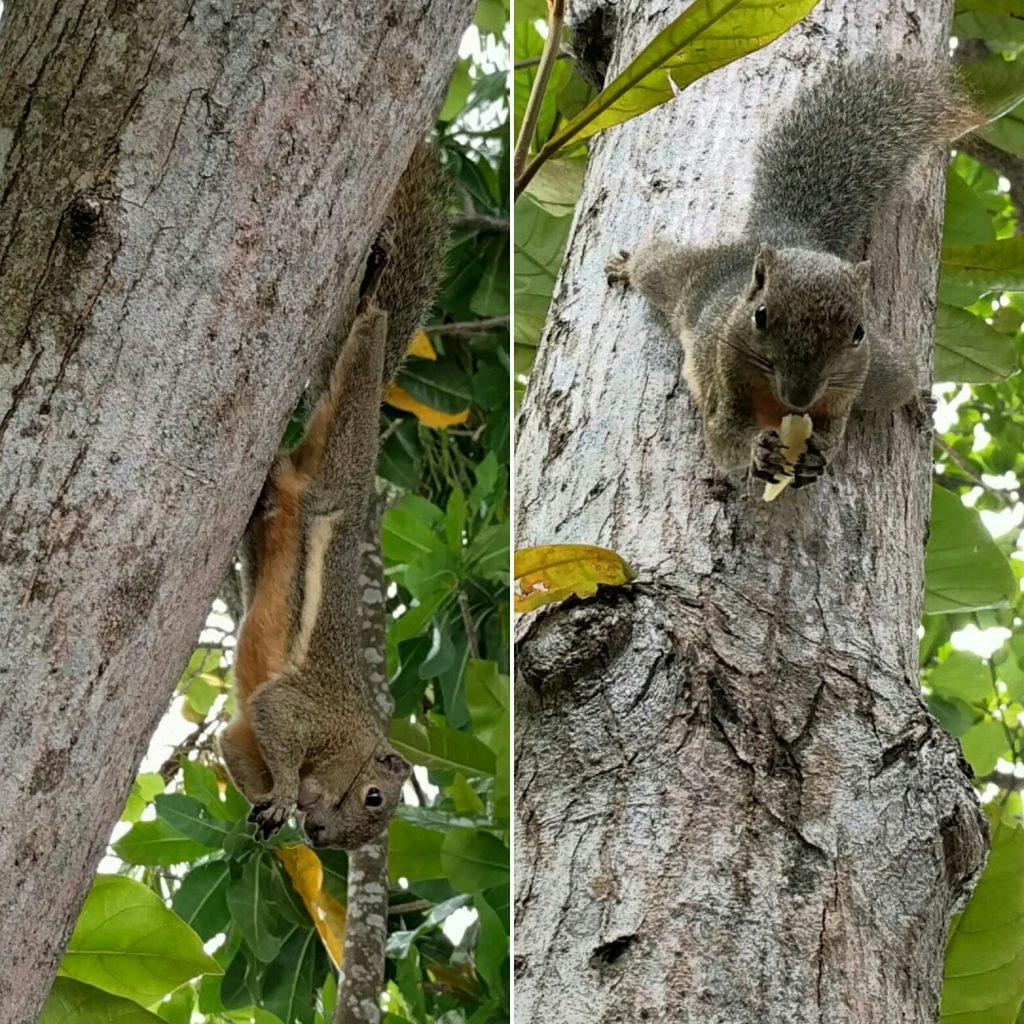 In der Mittagspause füttern von halb zusammen Hörnchen